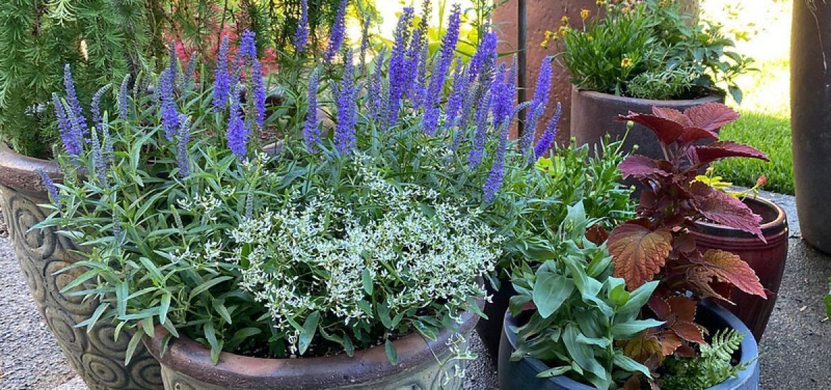 Here Is All You Need To Know About Gardening In The Heat